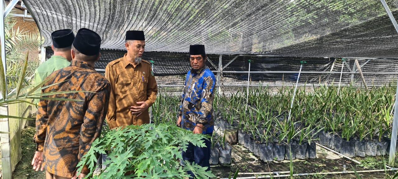 Ketum SANTA NU, Walikota Dumai Panen H.Paisal, SKM, MARS Panen Bunga Jantan pohon Kurma Ajwa