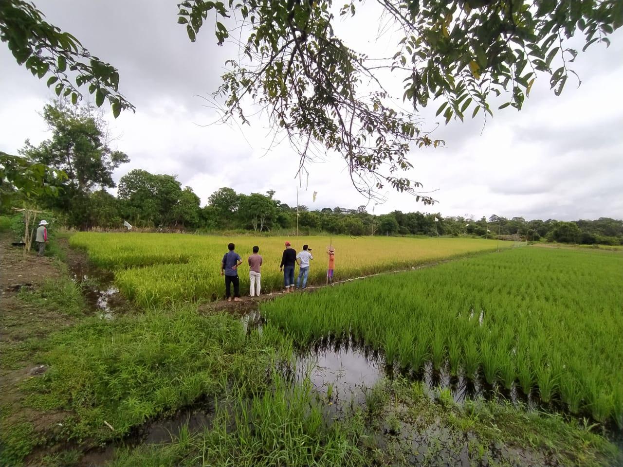 Dugaan Adanya Penyelewengan dan Penggelapan Penyaluran Pupuk Subsidi Program 2020 Kab Pelalawan
